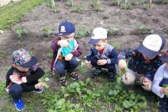 Kilka odsłon warsztatów ogrodniczych w grupie II