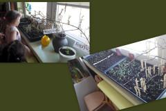 3-Dzieci-obserwuja-zmiany-w-pojemniku-na-parapecie-kielkowanie-wysianych-nasion