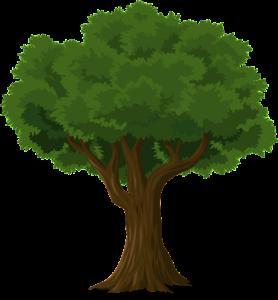 dzewo